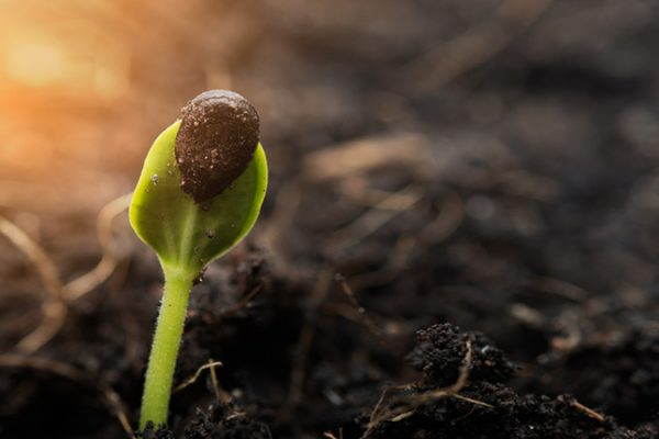 Seeds and Grain